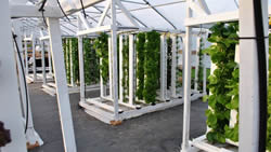 future of food vertical farm