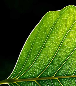 artificial leaf solar power