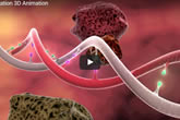 What is DNA? video collection