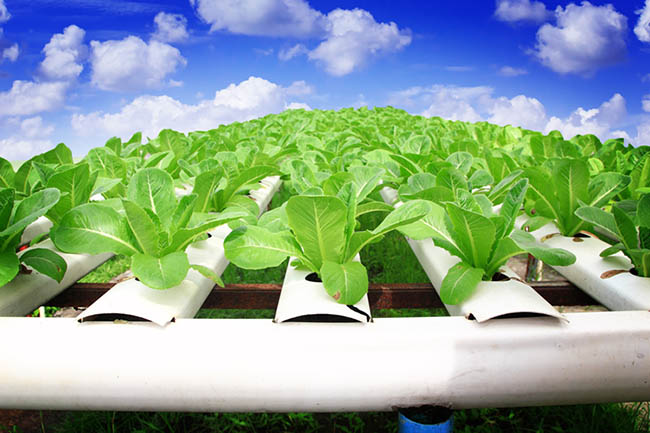 vertical farming future of agriculture